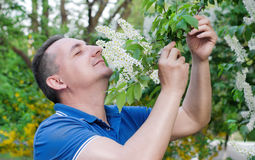 The man  sniffing the smell of bird-cherry Royalty Free Stock Photo