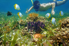 Man in snorkel underwater looks colorful sea life. Man in snorkel underwater looking colorful sea life and tropical fish in a coral reef Royalty Free Stock Image