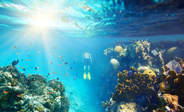 A man snorkeling in the beautiful coral reef with lots of fish.  royalty free stock image