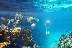 A man snorkeling in the beautiful coral reef with lots of fish Stock Images