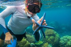 Man snorkeling in blue water with starfish. Snorkeling in coral reef. Snorkel holds blue starfish. Royalty Free Stock Photo