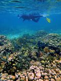 Snorkeler in the caribbean sea. Man snorkeling on a coral reef in the Caribbean sea Stock Images