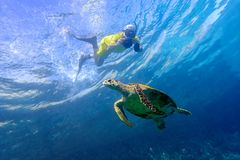 Man snorkeling with sea turtle in the tropical water of Maldives. Man snorkeling with sea turtle in the tropical water Stock Photography