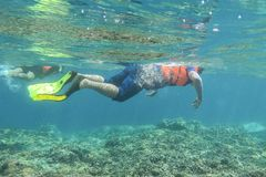 Man is snorkeling in tropical sea for see coral reef at Gili meno. Lombok, Indonesia.  Royalty Free Stock Photo