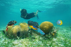 Man snorkeling underwater looking coral with fish Royalty Free Stock Images
