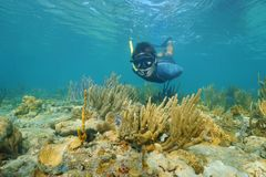 Man snorkeling underwater looks at the camera Royalty Free Stock Photo
