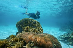 Man snorkeling underwater near corals tropical sea stock images