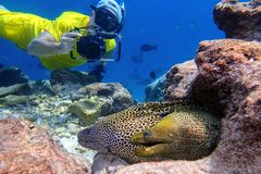 Man snorkels and photographs moray eel in the tropical water of Maldives Stock Image