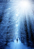 Man in snow forest Royalty Free Stock Images