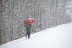 Man snow red umbrella trees many Royalty Free Stock Images