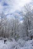 Man Snowshoeing. A long shot of a man snowshoeing in a snowy forest Royalty Free Stock Image