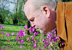 Man snuffing a flower. Royalty Free Stock Image