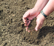 Man with soil in his hands. Royalty Free Stock Photo