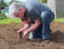 Man with soil in his hands. A Senior man kneeling on the fresh cultivated land  holding the soil and running the soil through his hands Stock Image