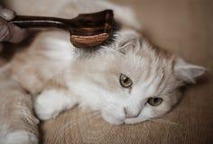 Man som ansar katten Arkivbilder