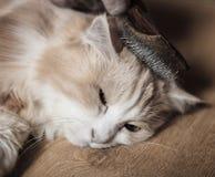 Man som ansar katten Arkivfoton
