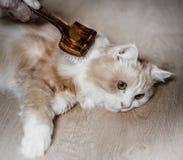 Man som ansar katten Royaltyfria Foton
