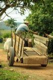 Man som arbetar på tobakfält i Kuba Arkivfoton
