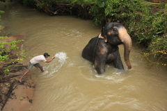 Man som badar ett elehpant, Sri Lanka Royaltyfri Foto