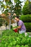 Man som beskär busken med hjälpmedlet i trädgård Arkivbild