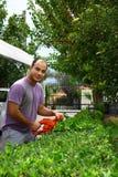 Man som beskär busken med hjälpmedlet i trädgård Royaltyfri Bild