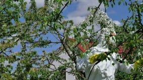 Man som besprutar insekticid på träd lager videofilmer