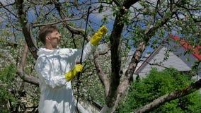 Man som besprutar träd från plågor arkivfilmer