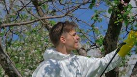 Man som besprutar trädet i hans gård stock video