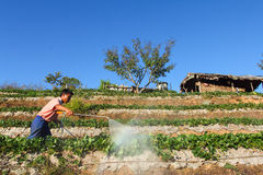 Man som bevattnar jordgubbefältet Royaltyfria Bilder