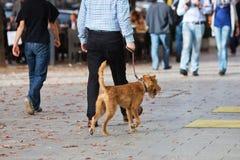 Man som går en hund i staden Arkivbild