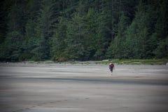 Man som går stranden på San Josef Bay nära härdad port, brittiska Colu royaltyfri fotografi