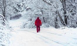 Man som går till och med den snöig skogen royaltyfria foton