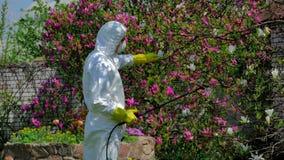 Man som gödslar blomningträdet stock video
