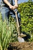 Man som gräver i grönsakträdgård Arkivbild