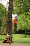 Man som kl?ttrar ett tr?d f?r att arbeta p? det i Tyskland royaltyfria foton