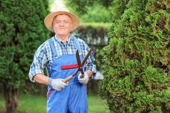 Man som klipper ett staket i en trädgård arkivfoton