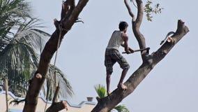 Man som klipper ett träd arkivfilmer
