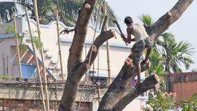 Man som klipper ett träd lager videofilmer