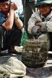 man som kontrollerar fåglar på den lokala bondemarknaden royaltyfri bild