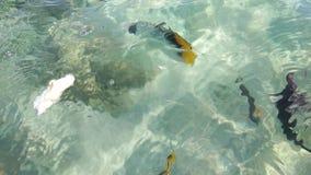 Man som matar den exotiska fisken i klart havsvatten arkivfilmer