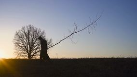 Man som planterar trädet i fält Solig soluppgång, solnedgång silhouette Vår eller sommar stock video
