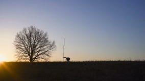 Man som planterar trädet i fält Solig soluppgång, solnedgång silhouette Vår eller sommar lager videofilmer