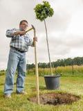 man som planterar treen Arkivfoton