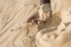 Man som rymmer någon sand i handen royaltyfri foto