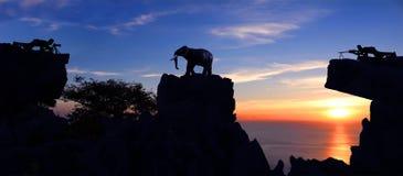 Man som skjuter en elefant på berget Arkivfoton