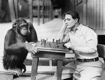 Man som spelar schack med apan (alla visade personer inte är längre uppehälle, och inget gods finns Leverantörgarantier som där w Arkivbild
