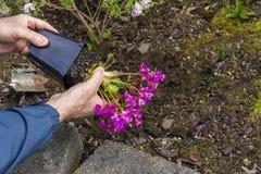 Man som tar bort blommor från den plast- krukan, innan att plantera i garen Fotografering för Bildbyråer