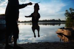 Man som utbildar hans hund arkivfoton