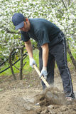 Man with spade. In vegetable patch stock image