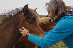 Man speaking with horses on a meadow at summer time, whisperer Stock Photography